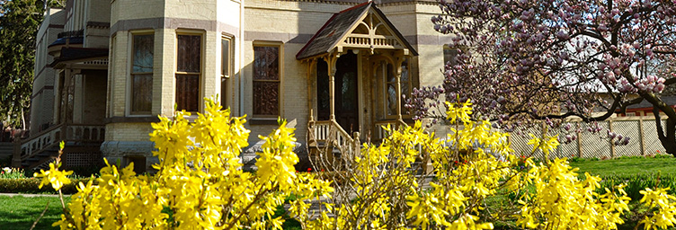yellow bushes in bloom in front of Annandale