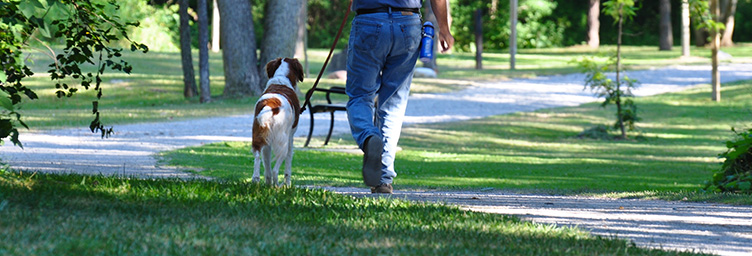 dog walking on leash with man in park